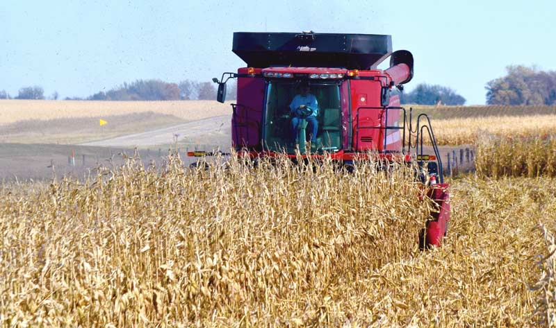 Red combine harvesting corn