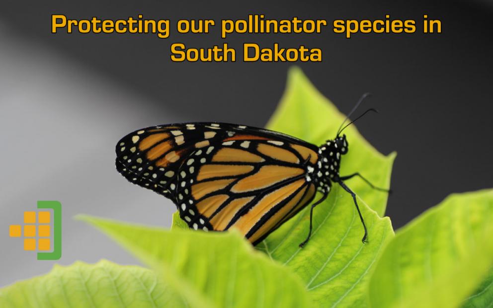 Pollinator blog image v1