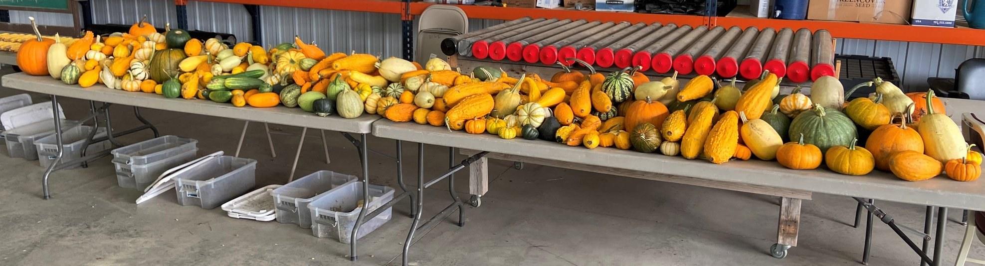 Milpa Harvest ND Menoken Farms