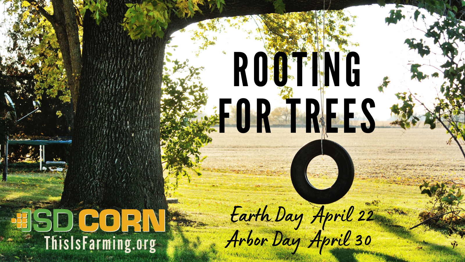 Rooting for Trees