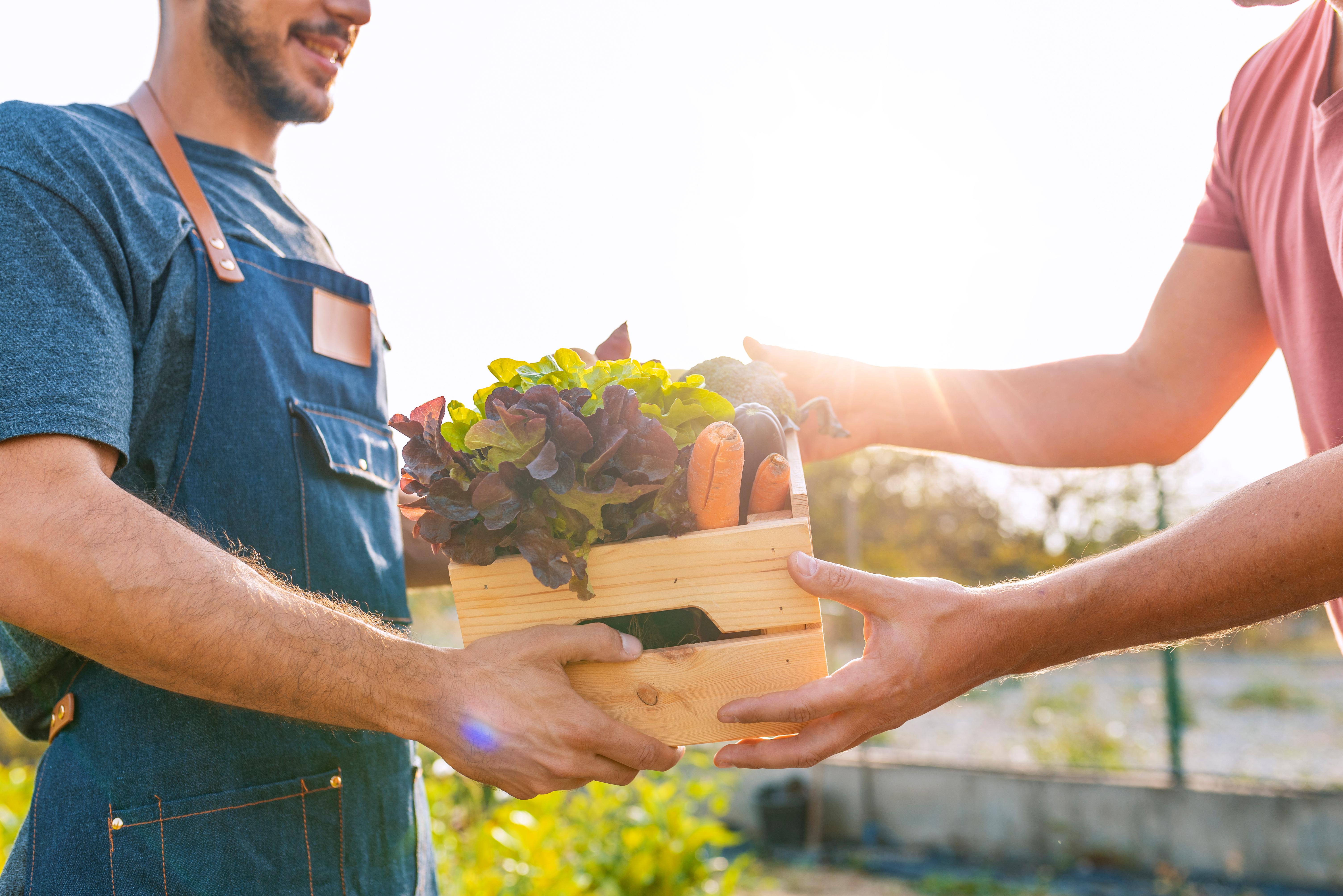 Gardening box of produce